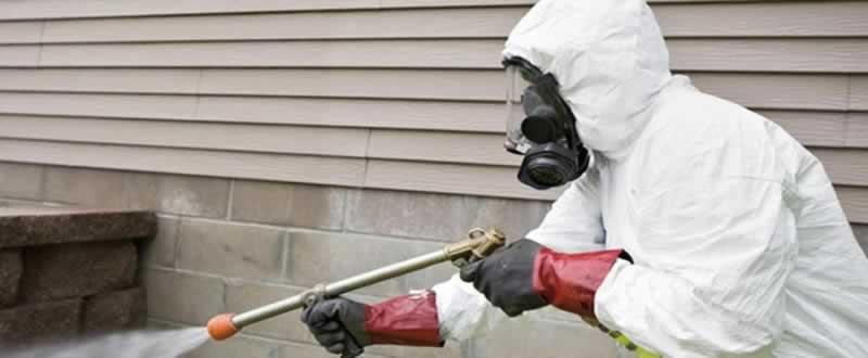 How to kill termites - spraying
