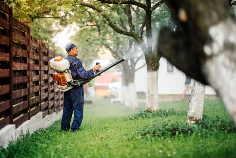 Pest control mistakes - mosquitos
