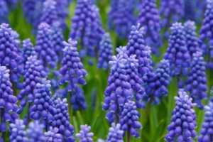 The Top 7 Beautiful Flowers You Can Grow in Your Garden
