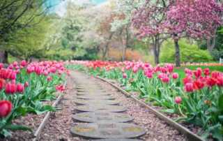 The Top 7 Beautiful Flowers You Can Grow in Your Garden - Tulip