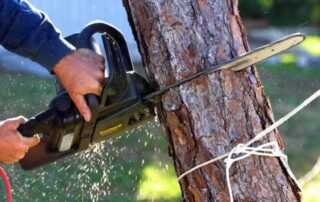 How do you safely remove a tree