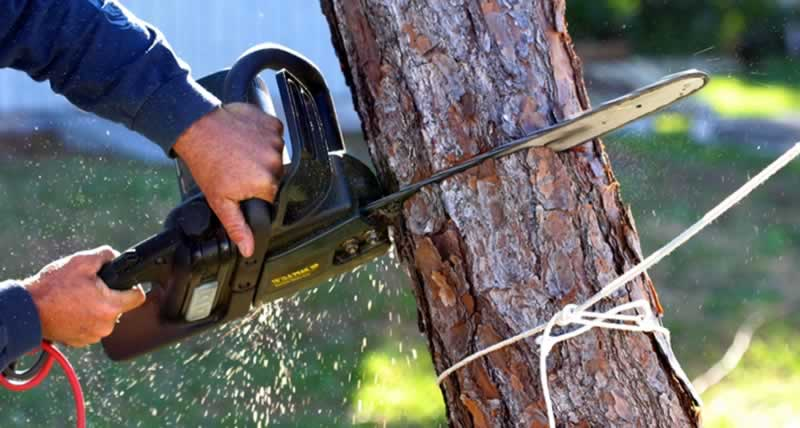 How to safely remove a tree