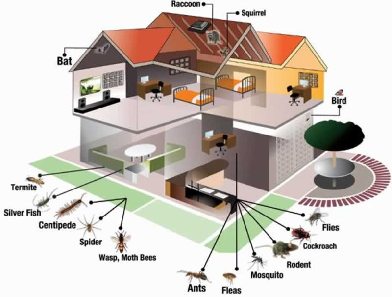 Tips on Dealing with Pests Within Your Home - house