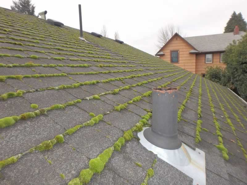 Seven Warning Signs Your Roof Needs to Be Replaced - moss