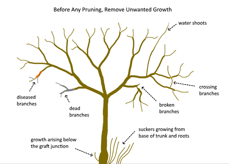 Why Tree Pruning is Important - tree