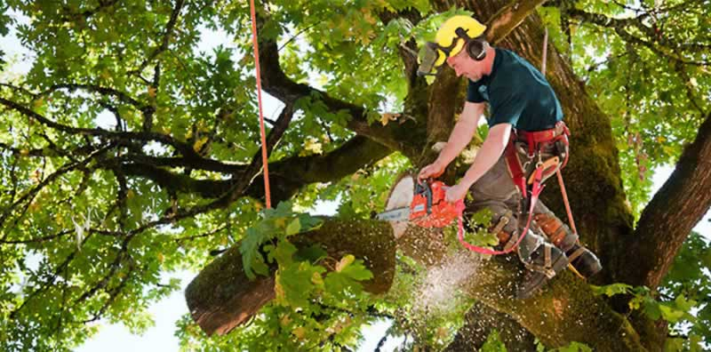 Hiring a Tree Service Company - cutting