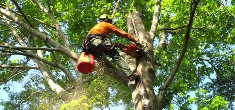 Hiring a Tree Service Company