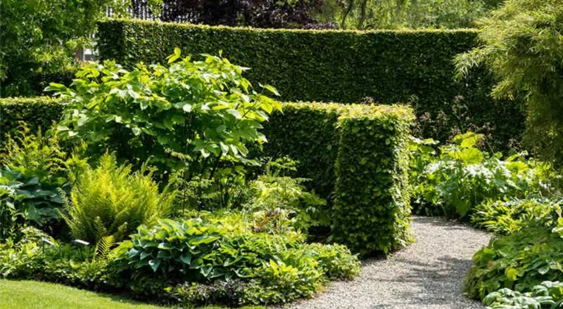 How Landscaping Can Protect Your Privacy - hedge