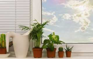 How To Spice Up Your Home's Look With Plastic Plants