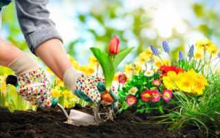 How do I prepare my garden for planting - planting flowers