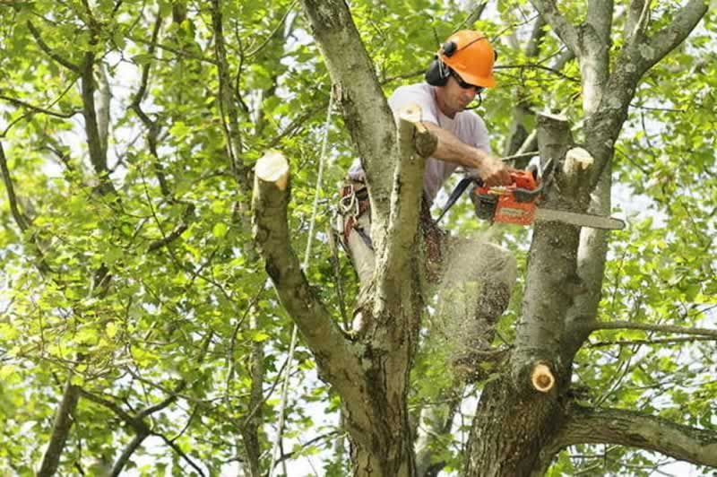 How to find the best tree service company - cutting