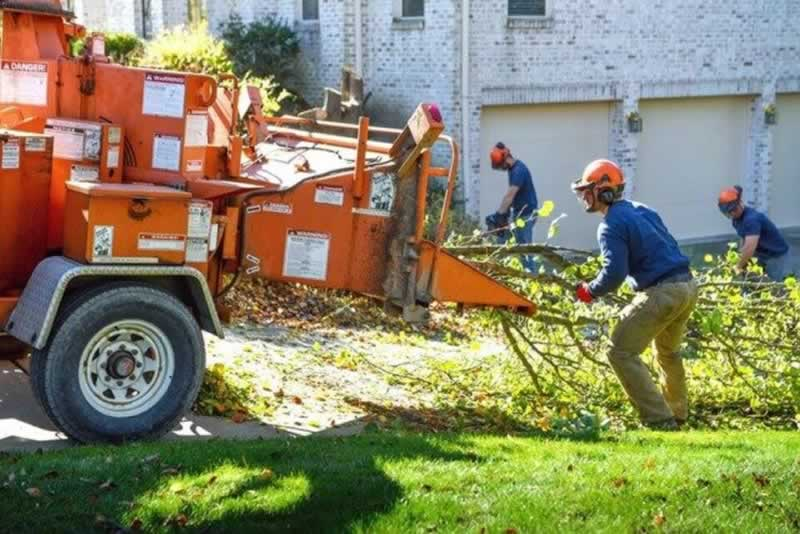 How to find the best tree service company