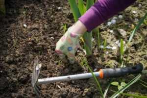 Keeping a Healthy Lawn Year-Round - weeding