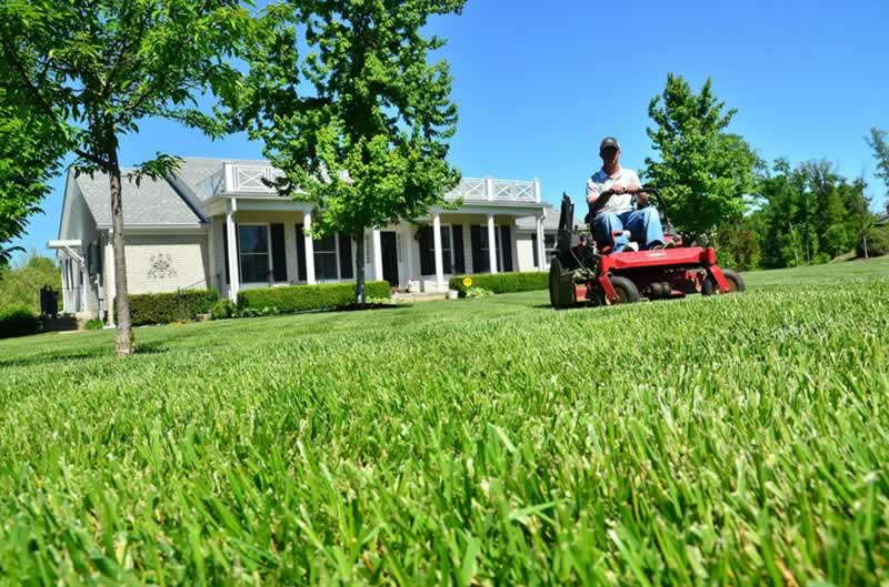 Keeping a Healthy Lawn Year-Round