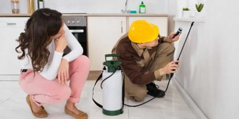 The Importance of Hiring a Pest Control Professional for the home - infestation