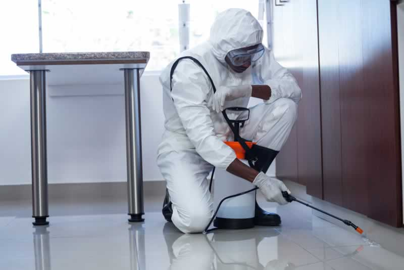 The Importance of Hiring a Pest Control Professional for the home