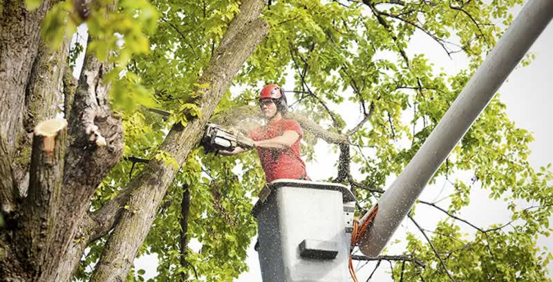When to Call a Professional Tree Service For Safe Tree Removal - platform
