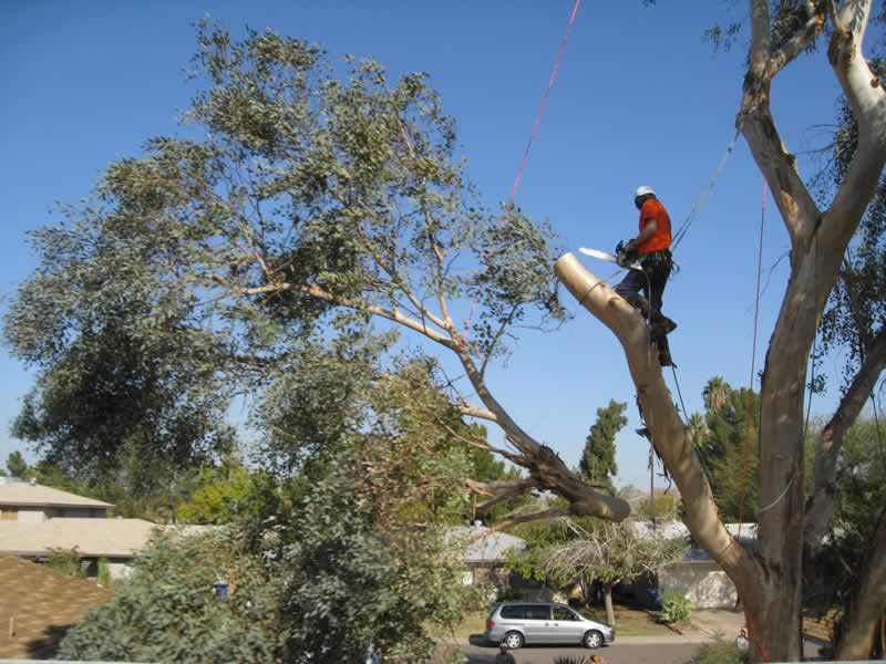 When to Call a Professional Tree Service For Safe Tree Removal