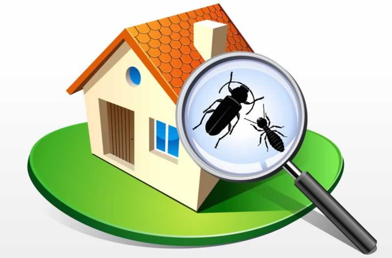 7 tips to buy a termite free home