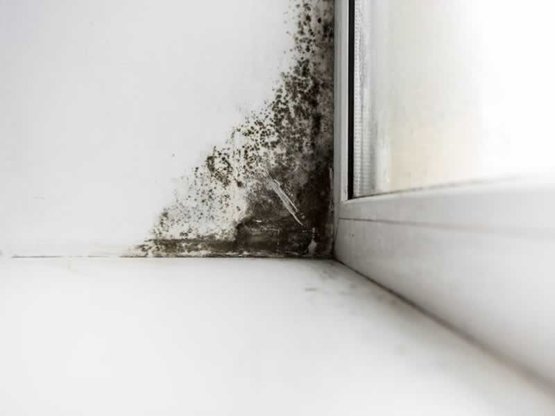 All on mold inspections - mold in the corner