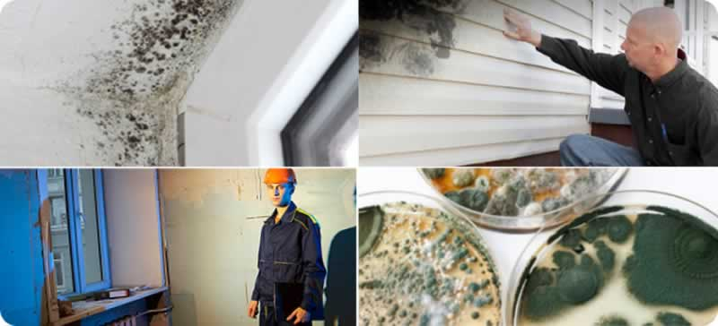 All on mold inspections