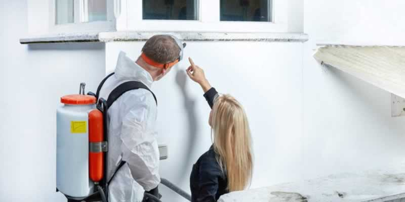 Top Benefits of Quick Mold Removal - professional