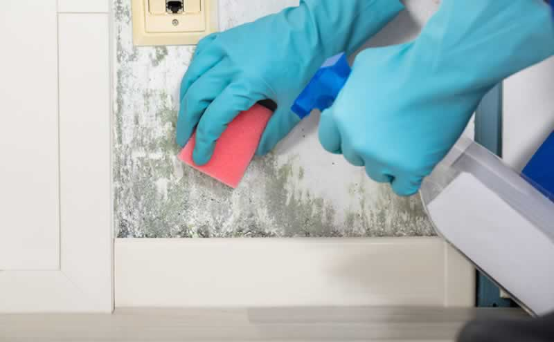 Top Benefits of Quick Mold Removal