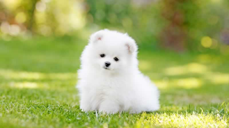 4 Facts about Teacup Puppies All Dog Lovers Should Know