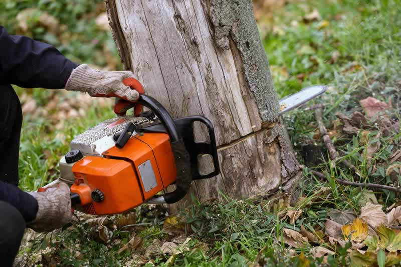 How to Remove a Tree on Your Property - chainsaw