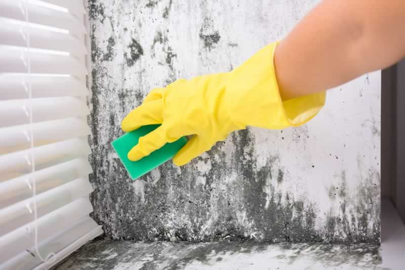 How to reduce mould and mildew in the home - removing