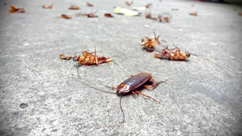 Tips for Preventing a Roach Invasion - dead roaches