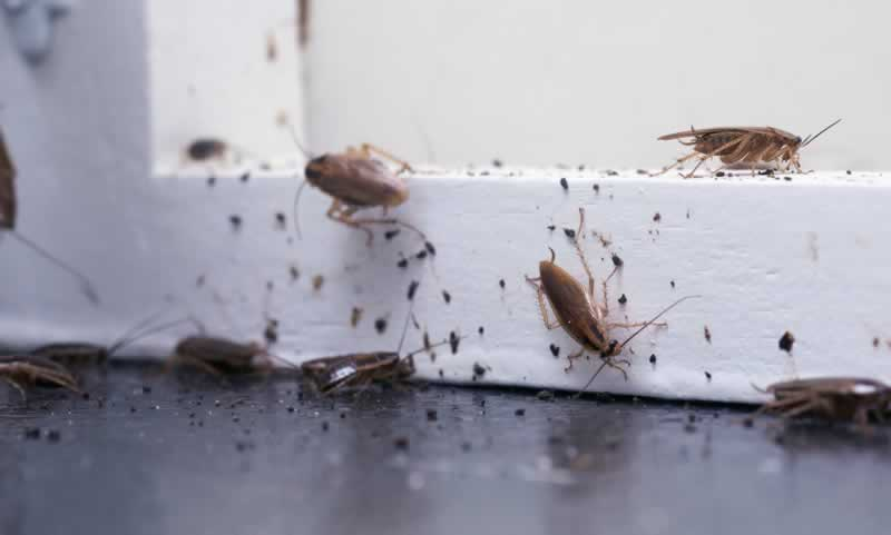 Tips for Preventing a Roach Invasion