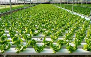 Benefits of Equipping A Hydroponic Systems For Your Farm