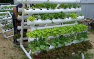 Benefits of Equipping A Hydroponic Systems For Your Farm - DIY hydroponic system