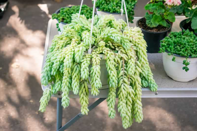 How To Create Decorative And Functional Items In Your Patio - plant