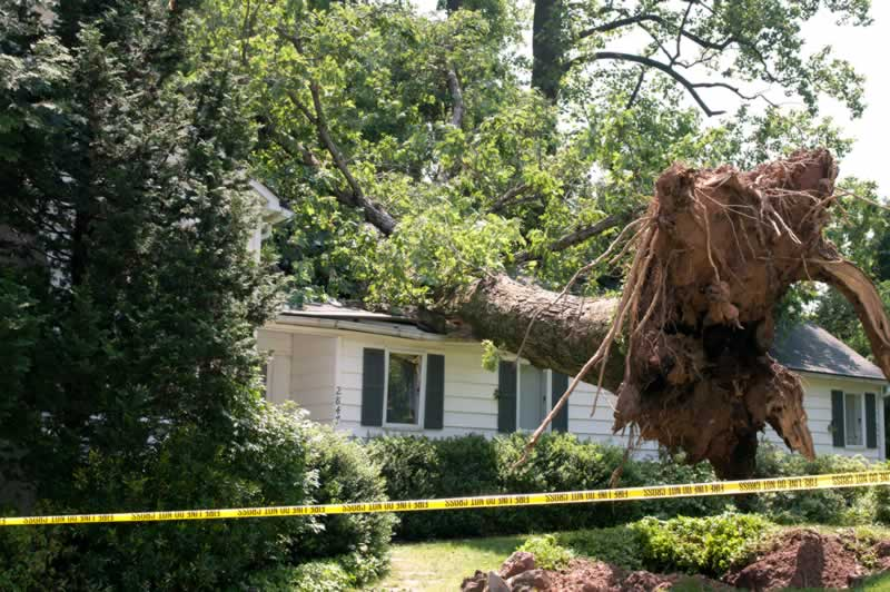 Buffalo Tree Removal And The Benefits of Removing Dangerous Trees - tree