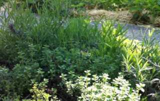 Herbs from your garden that can used to garnish a meal