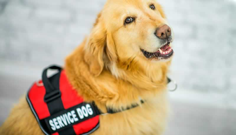 Here is what you need to know about Service Animals