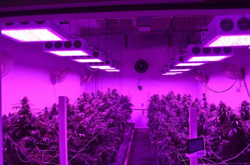 Spider Farmer LED Grow Light Reviews
