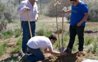 Taking Proper Care of Your Trees - planting
