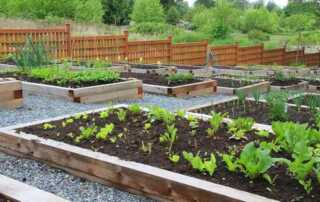 6 Tips and Tricks for Urban Gardening