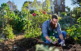 6 Tips and Tricks for Urban Gardening - urban garden