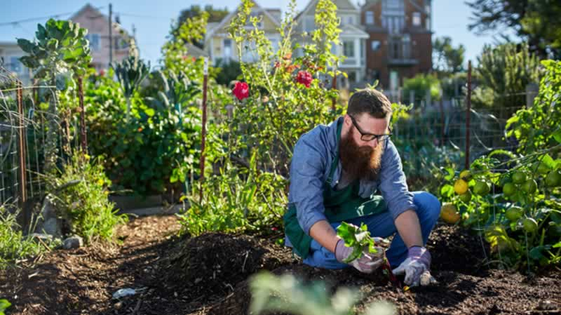 6 Tips and Tricks for Urban Gardening - urban garden