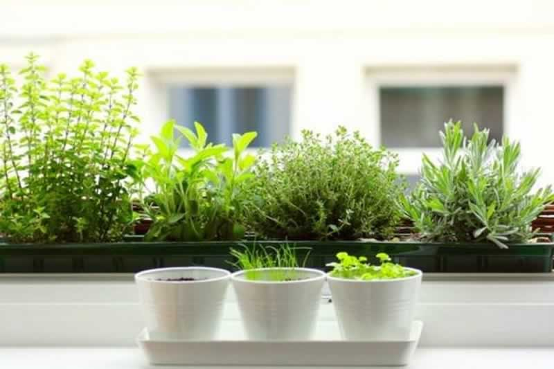 7 Common Mistakes Herb Gardeners Make - watering