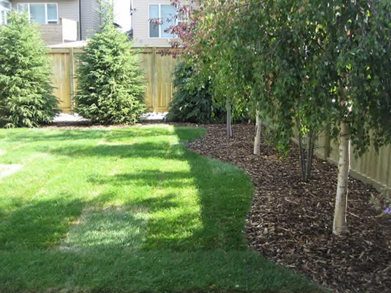 Choosing the right trees for your backyard - trees
