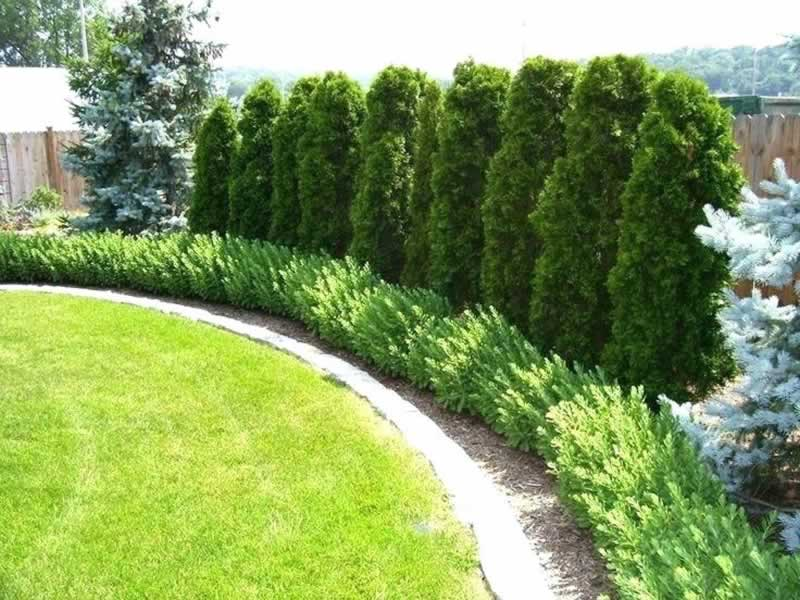 Choosing the right trees for your backyard