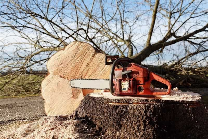 Tips for Chainsaw Care and Maintenance - chainsaw