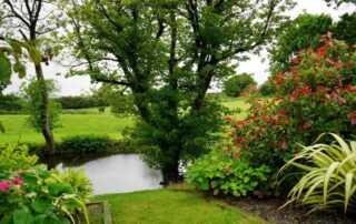 Transform Your Garden Into A Springtime Paradise