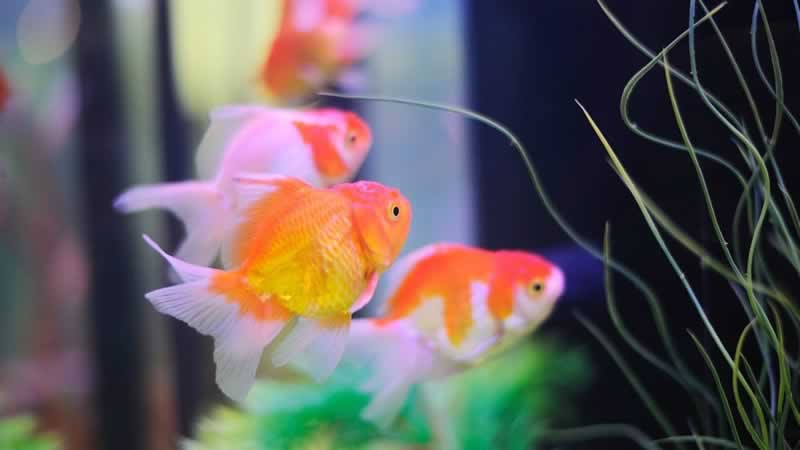 What You Should Know About Quiet Aquarium Air Pump - fish