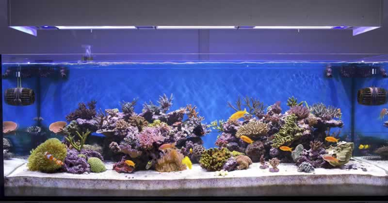 What You Should Know About Quiet Aquarium Air Pump